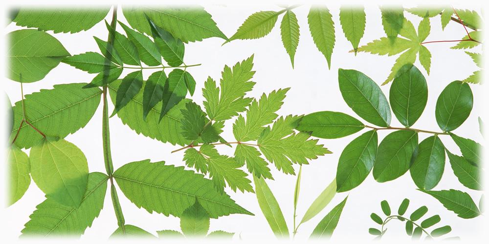 植物由来化粧品基準原料を主成分にしたドライマーク用洗剤
